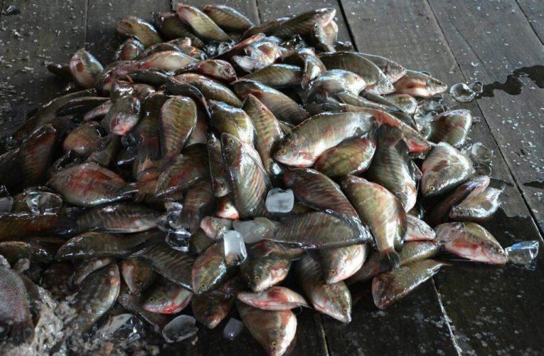 แหล่งขายส่งปลาสลิด คุณภาพดี มีชื่อเสียงมากที่สุดในประเทศไทย